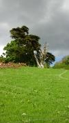 Gaeltacht Thiar Thir Chonaill.....Paint out in the Glebe Churchill Letterkenny