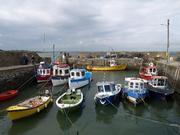 SEPA Paintout - Fethard on Sea, Co. Wexford 26/5/13