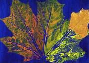 Herbarium #2