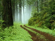 Forest Road, where dose it end