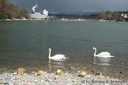 Hydropower Station Rheinfelden