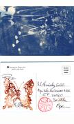 Buttercups in Blue-art-card-5:8:2013