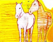 Wild Ponies by Allegra Sleep