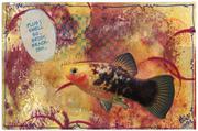 briny fish