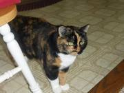 Baby Jane is C.Z.'s calico beauty