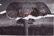 Elephant long haired from Jay Block