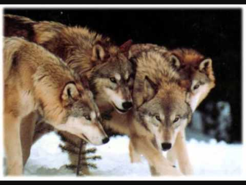 Loreena McKennitt - Mummer's Dance (Dance of wolves)