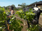 Trees Feed Livestock Feed Soil; Farmer Ecology and Skills for a Changing Planet