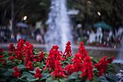 Η γιορτή των λουλουδιών (2) ...