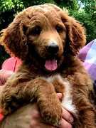 Brody 8 weeks