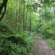 Clorofillati, Giovedì nel bosco
