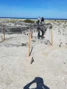 Piping plover exclosure