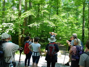 GoSmokies Hike, May 19, 2019, Greenbrier