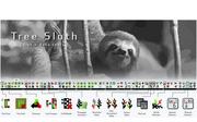 Tree Sloth
