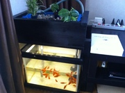 Black Micro Aquaponics System in Living Room