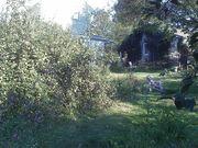 2011 at Bur Oak Farm