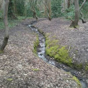 River Moselle Walk -  Queen's Wood to Lordship Rec