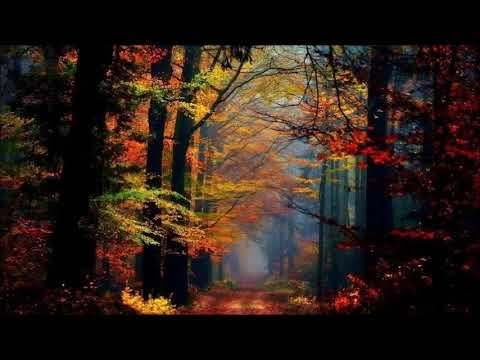 Pachelbel   Forest Garden