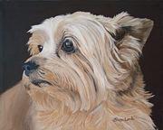Pet Portraits Dogs