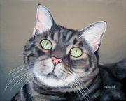 Pet Portraits Cats