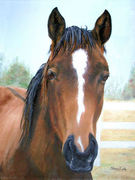 """Pet Portrait Painting Sample """"Thoroughbred Horse"""""""