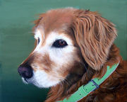 "Pet Portrait Painting Sample ""Mix Breed Dog"""