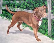 """Pet Portrait Painting Sample """"Pit Bull"""""""