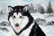 "Pet Portrait Painting Sample ""Siberian Husky"""