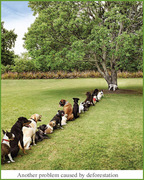 Another Problem Caused By Deforestation