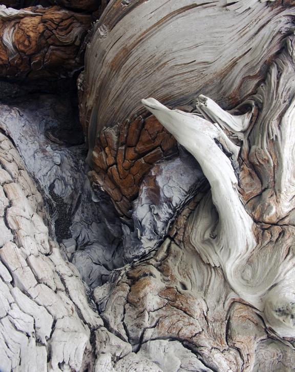 Driftwood Canyon VII