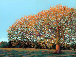 Compton Oak at DAwn