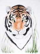 Tiger Tiger Where!