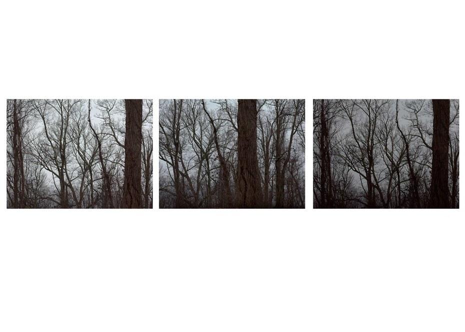 The Tree Alone (Bare)