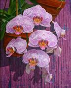 Orchids 1