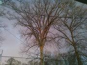 The Goddess Tree