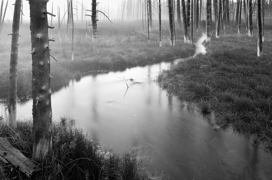 Creek, Marsh and Fog