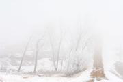 Road Into Fog