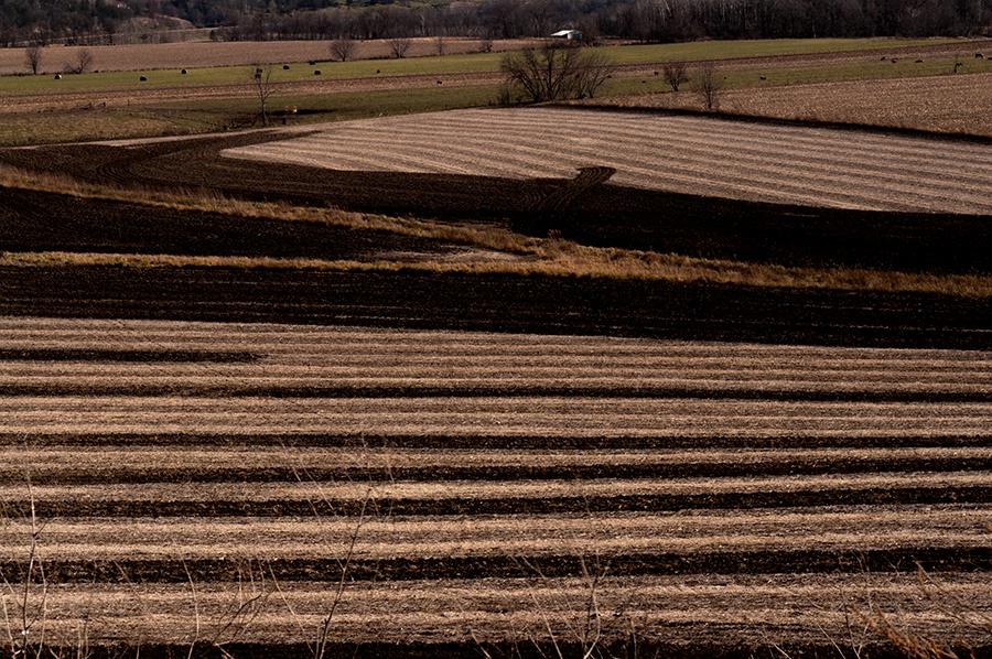 Valley Fields