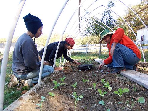 Katherine,Adam, & Ryanne planting