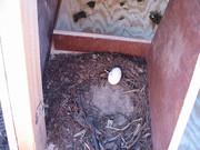 One already laid an egg