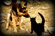 Buck and Junior