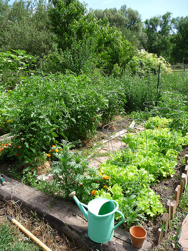 pepper and tomato bed