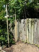 Building Garden Critter Deterrant Fence, April 2014