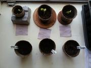 Update #1: Spring Organic Garden 2014