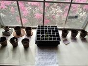 Spring Organic Garden 2014