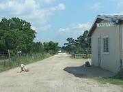 Gramen Dairy Farm Visit