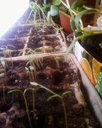 starter plants 2014
