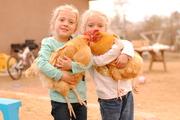 Chicken girls!