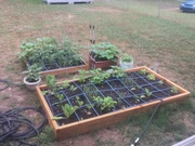 Raised Bed Garden Update.