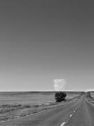 Tree to Cloud